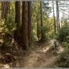 Classic Santa Cruz Mountain Biking