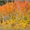 Fall Colors Photo Gallery