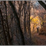 Mountain Bike Photos: Fall Color At Snowbasin, Utah