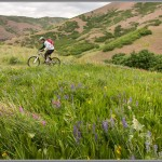 Mountain Bike Photos: Spring Wildflowers - Salt Lake City, Utah