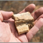 Petrified Wood From Near Zion National Park