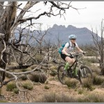 Mountain Bike Photos: Burned Trees & Zion