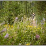 Wildflowers - Colorado Enduro World Series