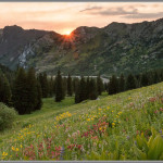 Wildflowers & Sunset - Albion Basin, Utah