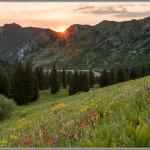 Wildflowers & Sunset - Albion Basin, Utah