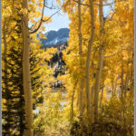 Fall Aspens at Alta - Best Photos of 2016